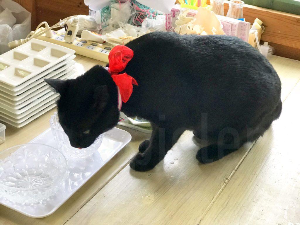 貝がら工房には黒猫のぼーすけさん