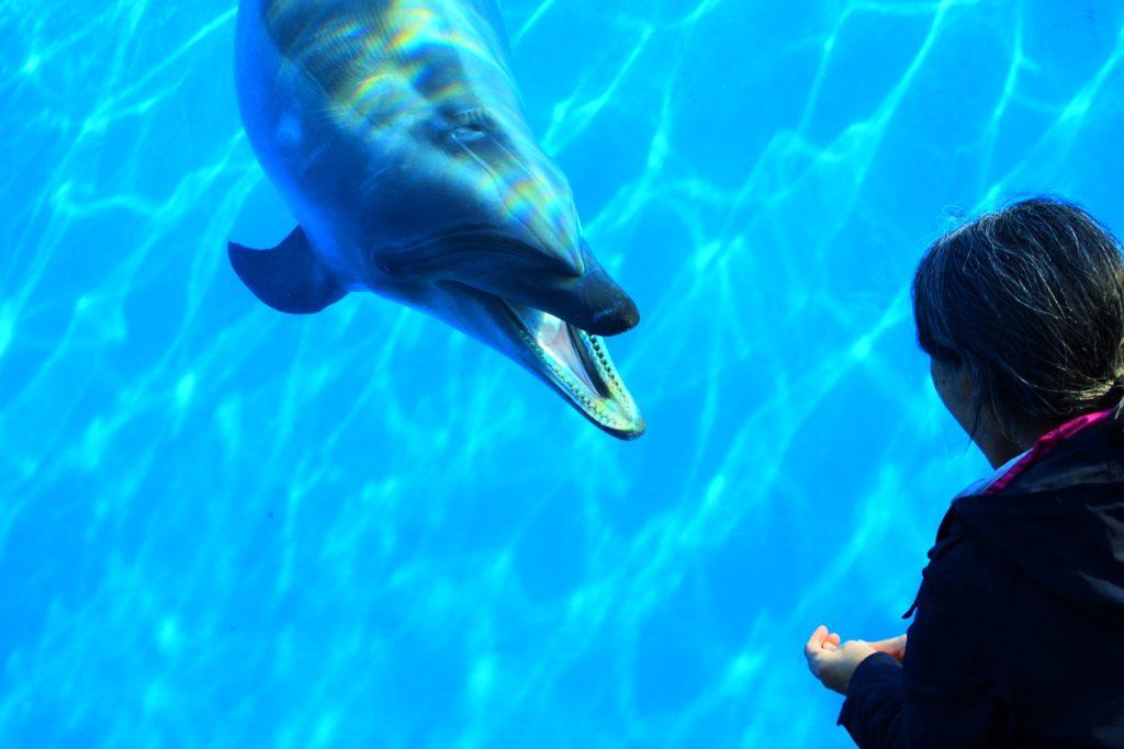 イルカが近寄ってきてくれる